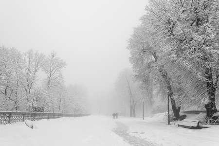 素敵な冬の都市公園の小道 写真素材