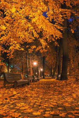 Beautiful autumn city park at night