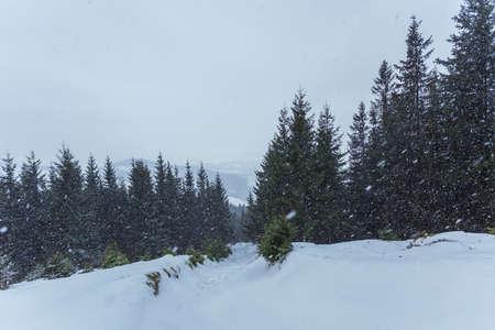 Beautiful winter mountains landscape