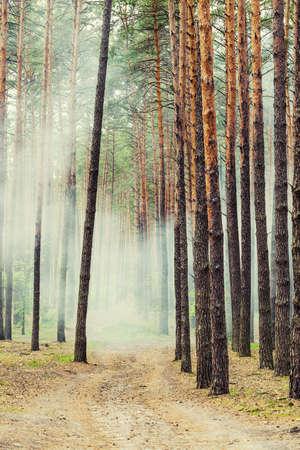 Mystic fantasy foggy wild forest Stock Photo