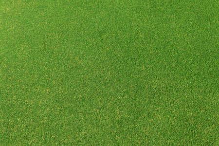 disciplines: Vector background texture of fresh green grass.