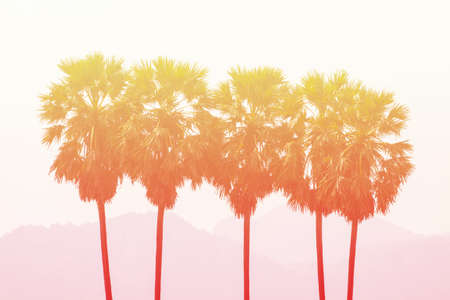 sugar palm: Sugar palm in pastel styles.