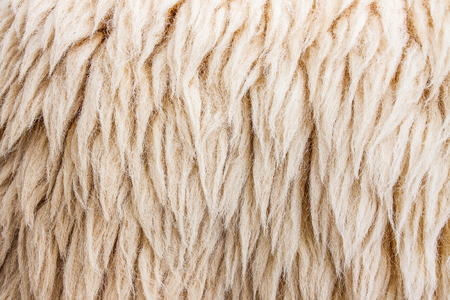 fleece: fleece Stock Photo