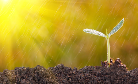 Seedlings with morning light and rain.