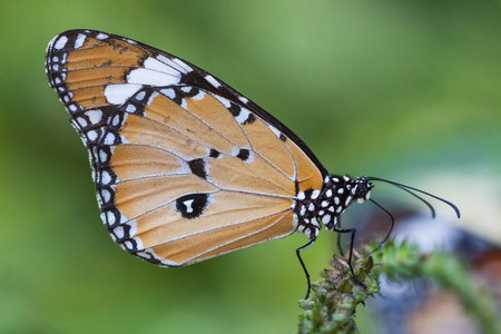 nectar: Viewing butterfly nectar from flowers. Stock Photo