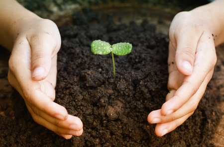 child protection: Hand of child protection sapling. Stock Photo