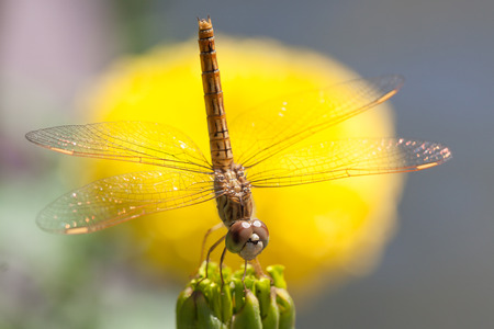 bluet: Dragonfly with flowers Stock Photo