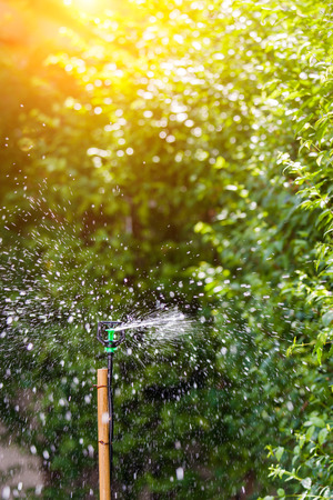 sprinkle system: Sprinkler watering