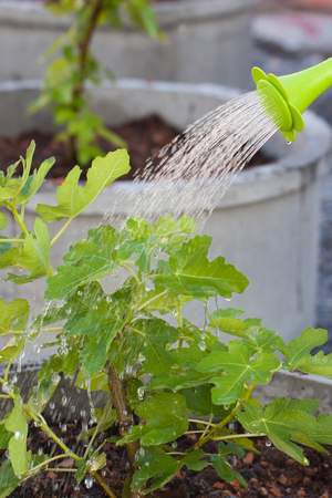 sprinkle system: Watering plant watering garden shower. Stock Photo
