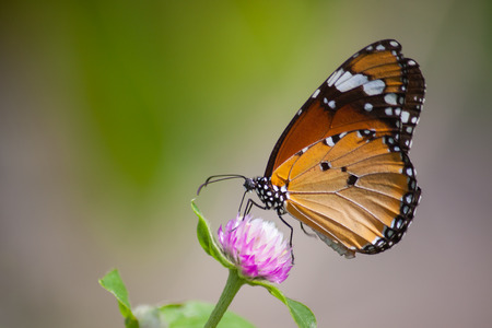 Butterfly with natural flowers Stock Photo