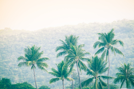 Coconut trees on the beach and mountains