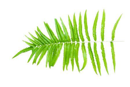 Fern leaf on a white background