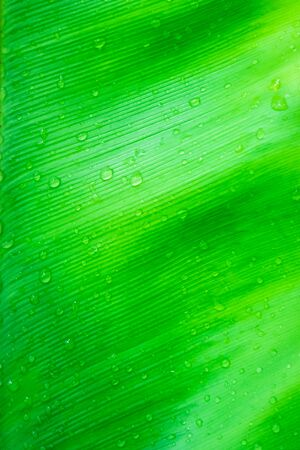 Natural pattern backdrop texture of green leaves Archivio Fotografico