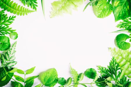 Green leaves on a white backdrop, leaves on white space