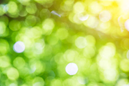 Bokeh, sunlight, trees and nature