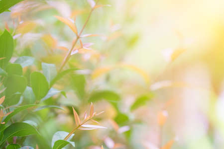 The young leaves of the tree and the morning sun Archivio Fotografico