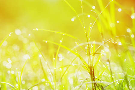Water droplets on the grass and sunlight