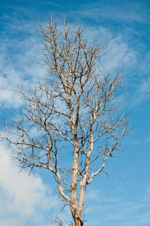 tree dry Stock Photo - 7864563