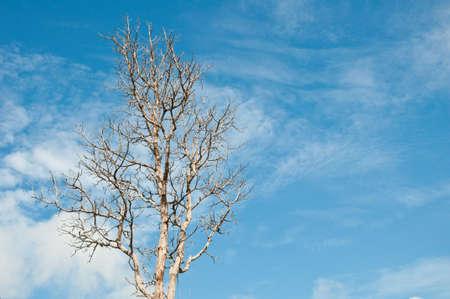 tree dry Stock Photo - 7864562