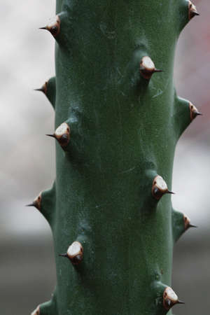 cactus spike background Stock Photo