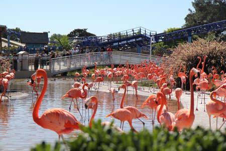 Standing flamingos