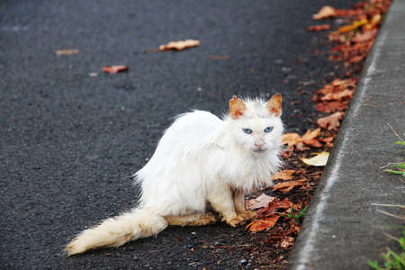 A stray dirty white cat