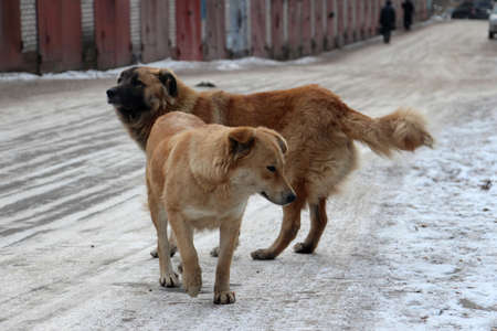 bumpy road: Stray dogs standing on a bumpy road