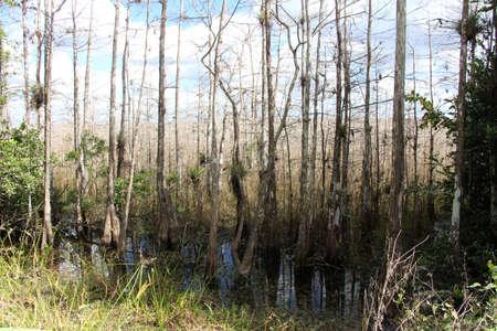 Everglades national park: Cypress forest, Everglades National Park, Florida Stock Photo