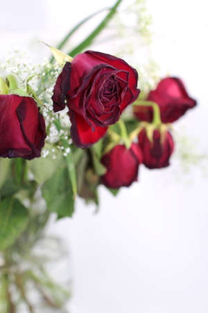 A bouquet of withered red roses, close up