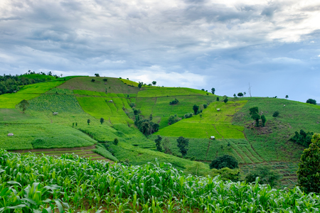 Corn farm and stepped rice terrace, Maecham, Chiangmai, Thailand Stock Photo
