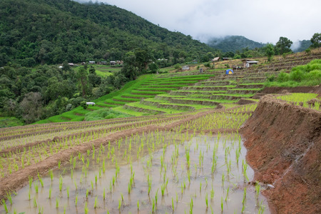 Stepped rice terrace at BAAN BONG PEANG, Maecham, Chiangmai, Thailand