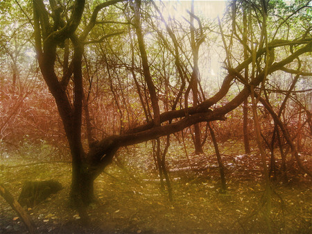 lomography: Autumn blurred forest with lomography photo effect Stock Photo