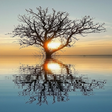 Silhouette of a tree in a flooded landscape at sunset