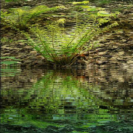 tuft: Natural background with green and yellow fern reflecting in water Stock Photo