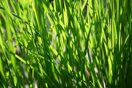 stalks: Natural background with stalks of grass illuminated by the sun