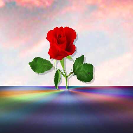 spectral: Rose on a background sky and rainbow spectral surface Stock Photo