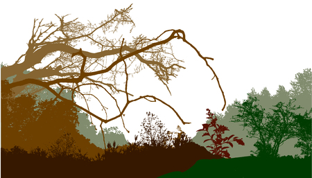 bar scene: Panoramic wild forest landscape with silhouettes of trees and plants Illustration