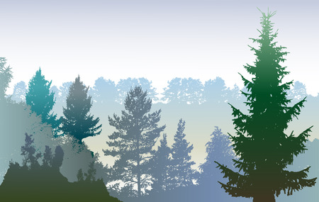 evergreen trees: Panoramic winter forest landscape with silhouettes of plants and evergreen trees Illustration