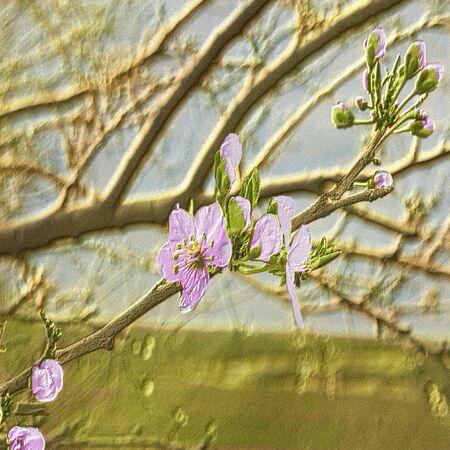embossed: Relief embossed spring flowering tree resembling painting