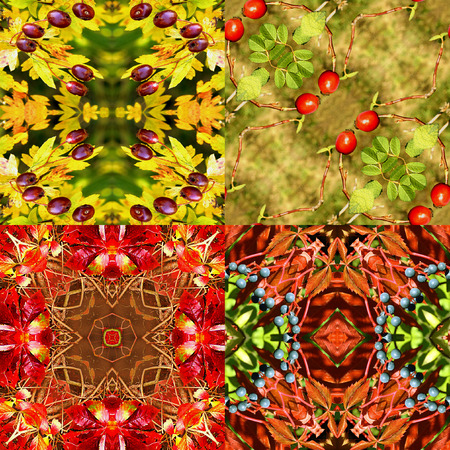 rose hips: Natural autumn seamless patterns with wild berries, leaves and rose hips. Set of four natural Kaleidoscopic red, yellow, green and brown patterns with autumn fruits Stock Photo