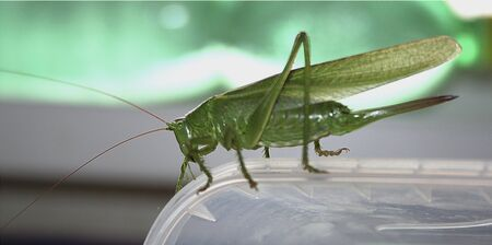 Big green grasshopper sitting on a plastic box. Green and gray background with grasshopper Stock Photo