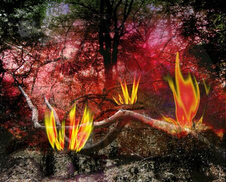 Dark landscape with forest trees and burning flames. Red, black, brown and yellow burned landscape with Fires