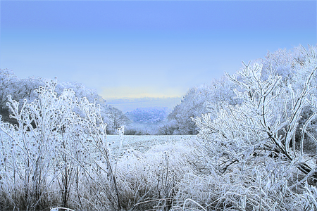 Misty winter landscape with trees, field and frozen plants. Blue, white and black panoramic snowy landscape with blue sky