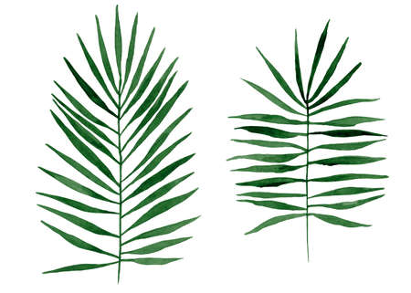 Tropical leaves hand drawn with watercolor isolated on white background
