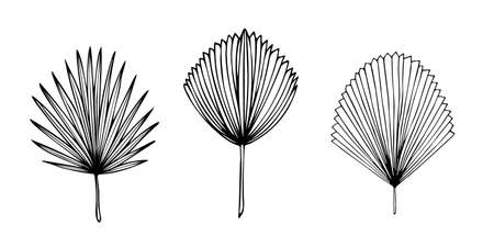 Set of exotic tropical palm leaves, hand-drawn in a doodle for elegant design of ornaments, patterns. Vector hand drawn set of various silhouette leaves in outline technique on the white background.