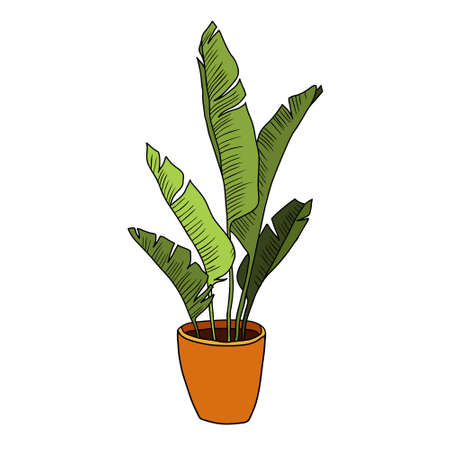 Hand drawn tropical home plants. Scandinavian style illustration, modern and elegant home decor. Illustration of houseplants, indoor and office plants in pot.