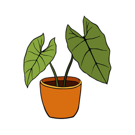 Hand drawn tropical Alocasia home plants. Scandinavian style illustration, modern and elegant home decor. Illustration of houseplants, indoor and office plants in pot.  イラスト・ベクター素材