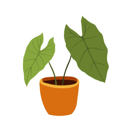 Hand drawn tropical Alocasia home plants. Scandinavian style illustration, modern and elegant home decor. Illustration of houseplants, indoor and office plants in pot.