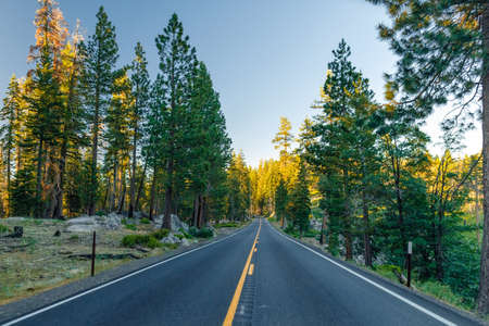 Beautiful road between the forest during sunset. at Yosemite National Park California. 版權商用圖片