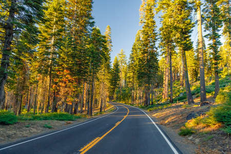 dome of the rock: Beautiful road between the forest during sunset. at Yosemite National Park California. Stock Photo